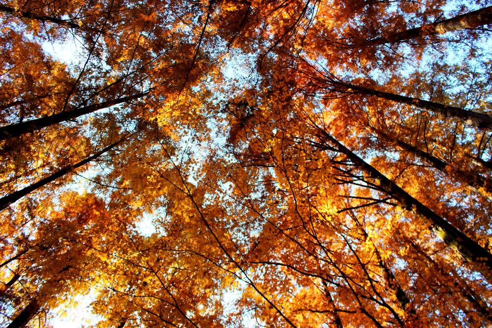 ナチュラル・リラックス・アンド・チル…自然を感じ、再認識する自分のリズム。「生田緑地」フォト散歩