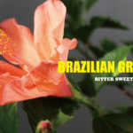 ソウル、ファンク、ディスコ好きなら聴くべきメロウなブラジリアン・グルーヴ15曲。BITTER SWEET & MELLOW : Brazilian Groove【プレイリスト】