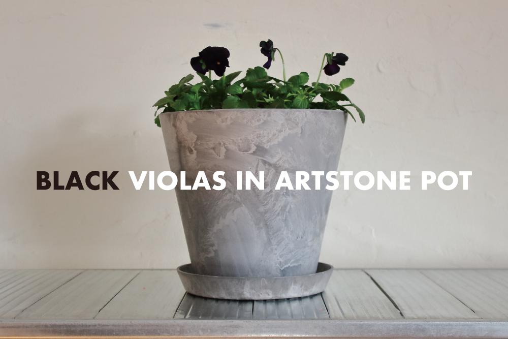黒ビオラとアートストーンのポットで、冬にシックな鉢植えを。