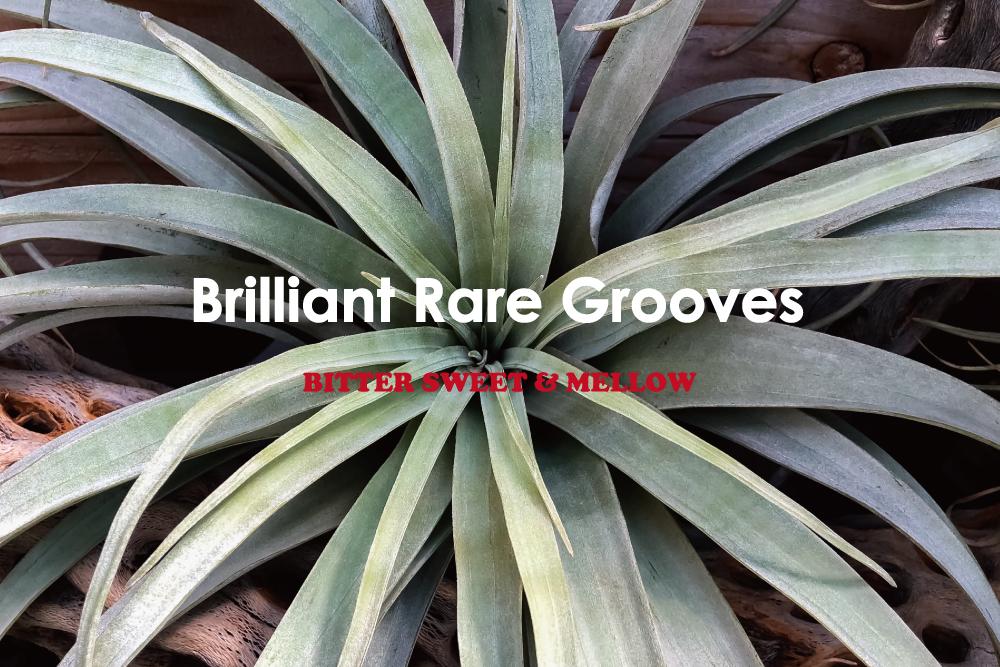心地よい春の季節に聴きたいファンキーでメロウなレアグルーヴ15曲。BITTER SWEET & MELLOW : Brilliant Rare Grooves【プレイリスト】