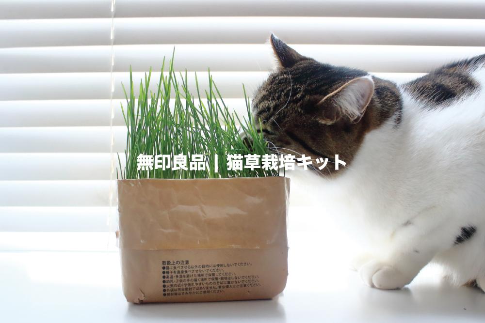 植物好きで猫を飼ってるなら、無印良品「猫草栽培キット」がおすすめ。