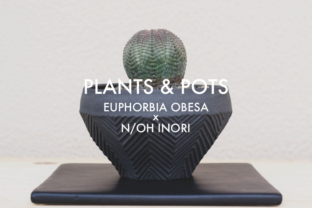 植物と鉢。ユーフォルビア・オベサとN/OH INORI