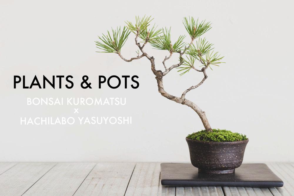植物と鉢。黒松の盆栽とHACHILABOの「安善POT」