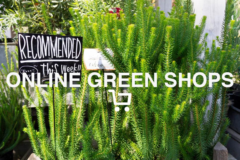 絶対いいものが手に入る。グリーン(植物)のおすすめオンラインショップまとめ
