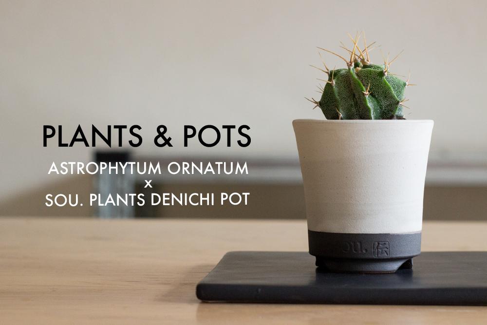 """植物と鉢。アストロフィツム""""般若""""とsou.plantsのオリジナル伝市鉢"""