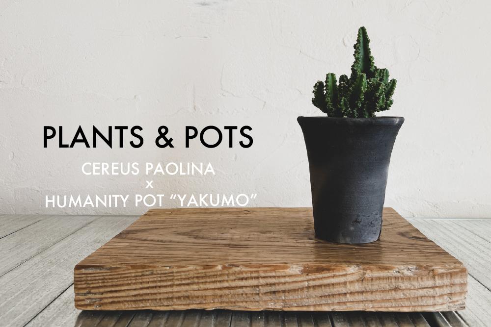 植物と鉢。セレウスパオリーナとhumanity pot「ヤクモ」(足場板を地板に)